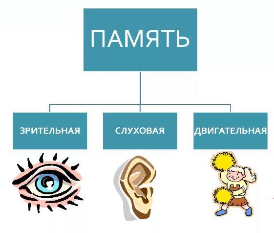 razvitie-pamyati-i-vnimaniya-u-detei-doshkolnogo-vozrasta-vidi