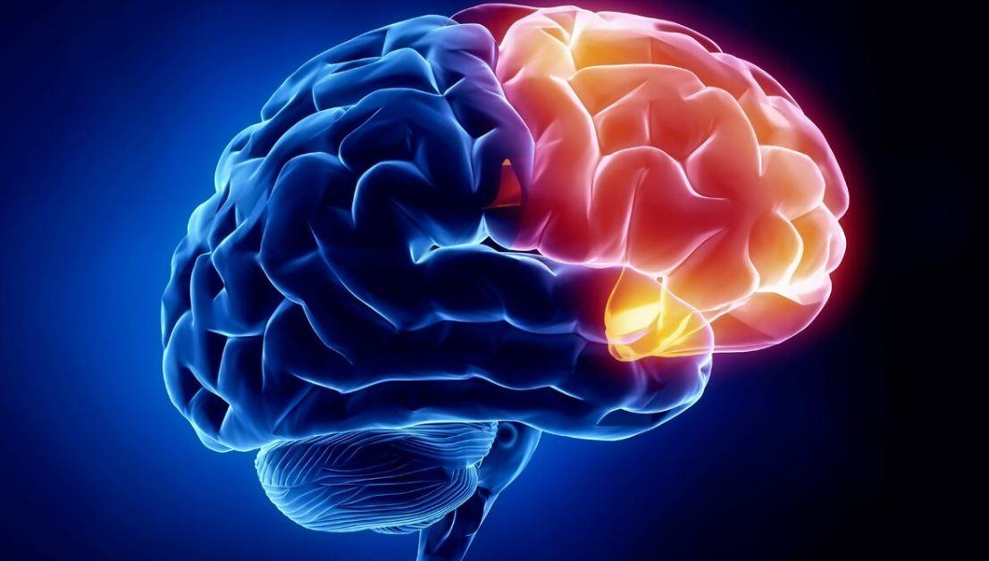 Как развить мозг и память взрослому человеку