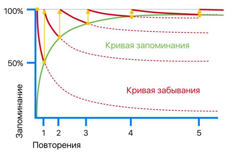 Как правильно запоминать надолго - кривая запоминания Эббингауза